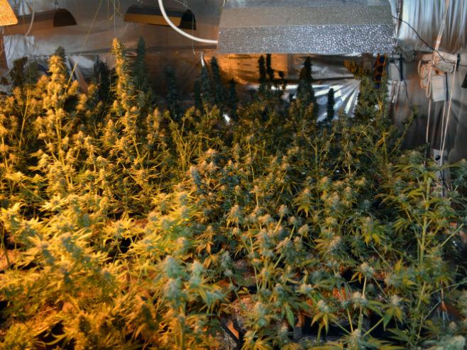 Laboratorija za uzgoj marihuane (arhiv) - Foto: SRNA