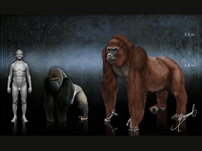Gigantopithecus u poređenju sa čovjekom i gorilom - Foto: ilustracija