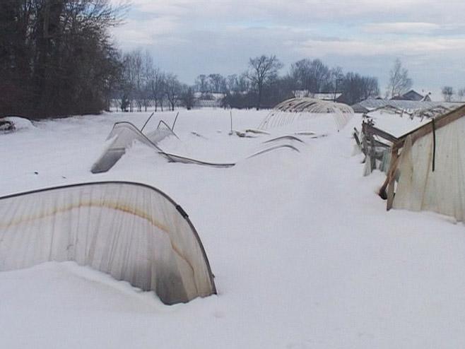 Uništeni plastenici pod snijegom - Foto: RTRS