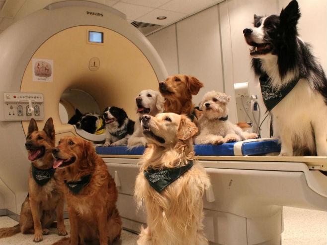 Psi razumiju šta im ljudi govore (Foto: Eniko Kubinyi) -