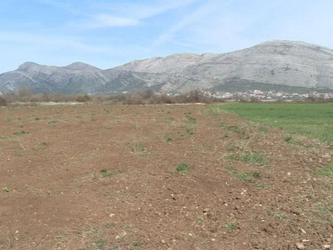 Proizodnja nara u Trebinju - Foto: RTRS