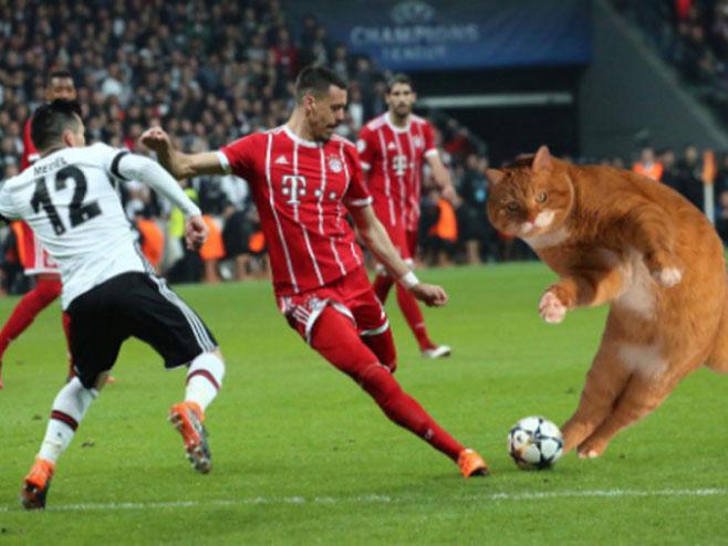 (VIDEO) MAČAK PROGLAŠEN IGRAČEM UTAKMICE! Bayern savladao Bešiktaš
