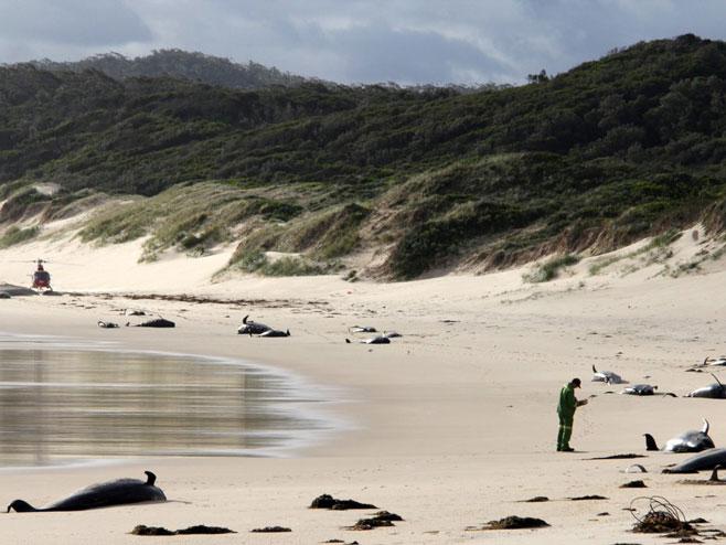 Uginuli kitovi (foto: ndtv.com) -