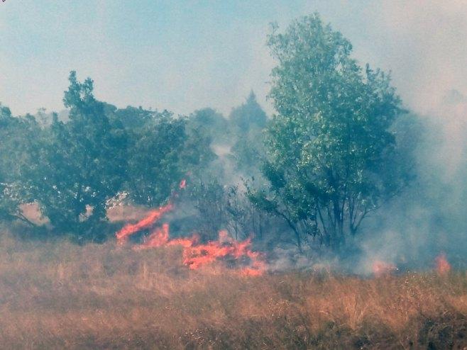 Požar nadomak Bileće - Foto: SRNA