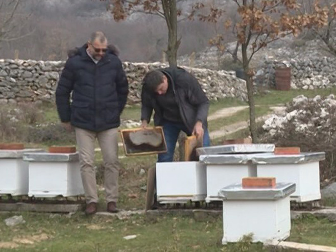 Pčelarstvo u Hercegovini - Foto: RTRS