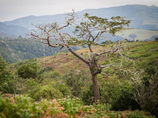 Kedar na Malaviju (Foto: © Morgan Trimble) -